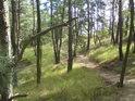 Vlnící s pěšina přes bor.