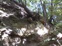 Kořeny stromů si v opuce dokáží najít skulinky, které pak zvětšují a zvětšují...