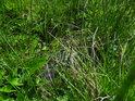 Bažina travou krytá.