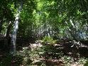 Východní svah Velkého Bezdězu, to je většinou bukový les.