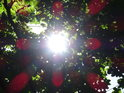 Slunce za bukovými listy se činí, ale velice záleží na tom, jak se díváme.