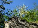 Stromy se zachytávají na kamenném zdivu a nelítostně jej trhají. Člověk tu tedy má věčnou práci, pokud mu jde o zachování zdiva.