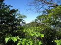 Vrchol Malého Bezdězu se ukazuje mezi větvemi stromů.
