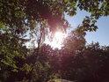 Slunce za bukovým listím na Veřejové skále.