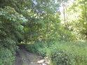 Příjezdová cesta od Veltrub v době vegetačního bujení.