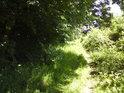 Pěšina mezi Veltrubským luhem a řekou Labe.