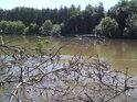 Po větší vodě zůstaly u břehu Labe větve, které byly přineseny odkudsi výše proti proudu.