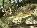 Romantický skalní pěšina mezi bukovým kořáním.