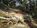 Borové kořání a v něm poházené větve borovic.