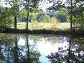 Vodní tůň zrcadlí pobřežní duby.