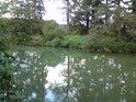 Řeka Tichá Orlice má o poznání jinou barvu, než okolní slepá ramena.