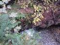 Další z odvážných pohledů do skalní rozsedliny, kudy proudí Stříbrný potok.