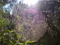 Křižácké pavučiny ohlašují babí léto.