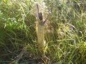 Takový mrtvý pahýl patří k životu louky.