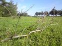 Osaměle ležící větev na louce.