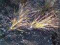 Traviny se ve skalách uchytí snáz, než třeba dřeviny.