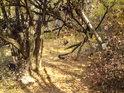 Cesta na vrchol Vrabinec je prudká a romantická.