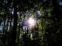 Slunce prosvítá přes Vrapač.