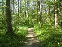Cesta přes Vrapač vede dále na město Litovel.