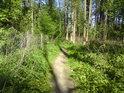Přes Vrapač vede turistická trasa, hezká pěšina.