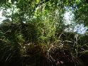 Prosluněný trs trávy.