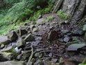 Pod vodopádem je vývařiště, i když při zdejším průtoku je lépe tento výraz brát s rezervou.