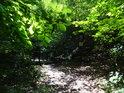 Pohled z pod bukových listů na pěšinu a lávku přes Podlešínský potok.