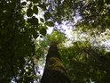 Tam kde je těsno, tam jsou stromy štíhlé a vlastně závislé na svých sousedech.