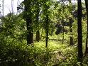 Dílem by bylo možné říct, že jsme v lužním pralese.
