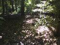 V západní části chráněného území rostou též buky a duby.