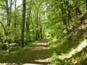 Cesta podél levého břehu Moravy tvoří východní hranici chráněného území.