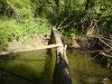 Kmeny padají přes vodu a tvoří přirozené lávky, někdy jim lidé pomohou.