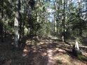 Lesní cesta ve východní části chráněného území.