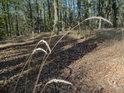 Několik stébel lesní trávy, toho času zalitých slunečními paprsky.