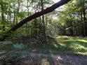 Lesní křižovatka T s lehce zvýšeným nebezpečím.