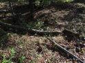 Nenápadná lesní stružka.