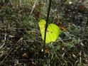 Sluncem zalitý list činí jinak nevýraznou lesní louku zajímavější.