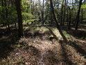 Lesní pěšina je dobře znatelná.