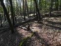 Bukový les v mírném svahu.