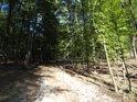 Lesní cesta je střídavě osvětlena slunečním svitem a pak zase zastíněna.