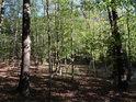 Zadní Hády, to je především bukový les.