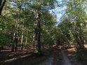 Na lesní cestu se svalilo pokácené dřevo.