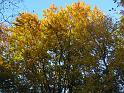 Slunce se opřelo o žluté podzimní listí.