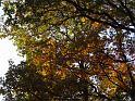 Dubové listy hýří všemi podzimními barvami.
