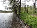 Jaro v rozpuku na břehu a hrázi rybníka Velká Kamenice.