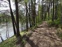 Cesta po severním svahu borovým lesem nad rybníkem Velká Kamenice.