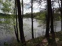 Čeřící se hladina rybníka Velká Kamenice za kmeny borovic a rozvíjejícími se listy doplňujících křovin.