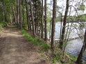 Bor na severní straně rybníka Velká Kamenice.