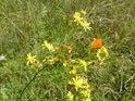 Zdá se, že tento motýl zůstal ušetřen sítěk lovců motýlů.