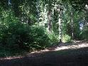 Lesní cesta pod vrcholem Žákovy hory.